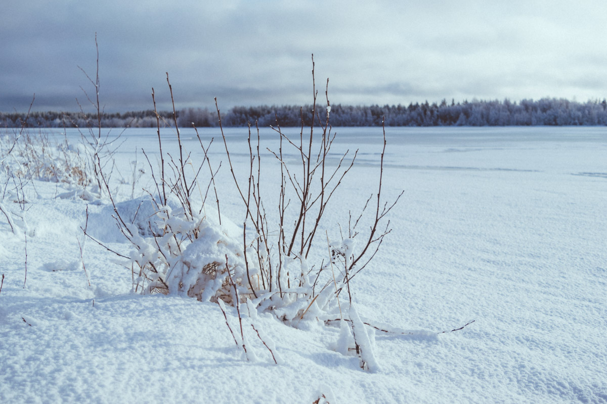 Winter landscape with leafless plant