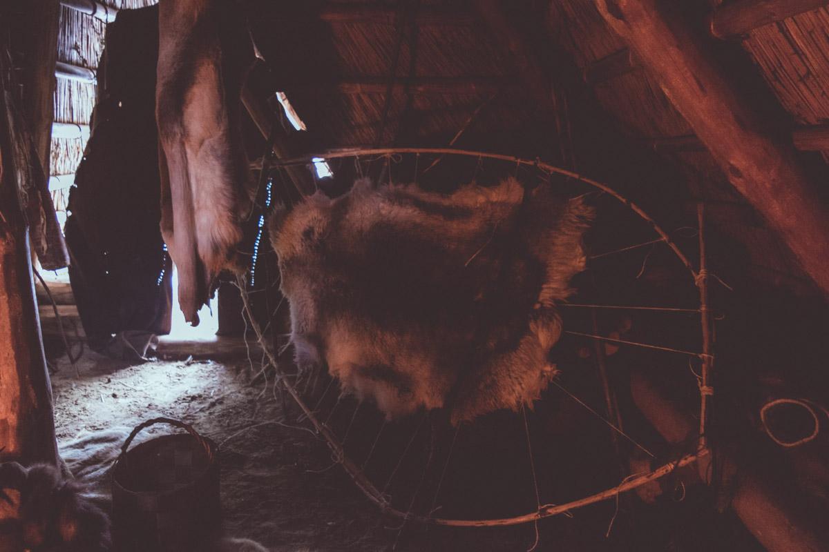 Reindeer hide framed and drying