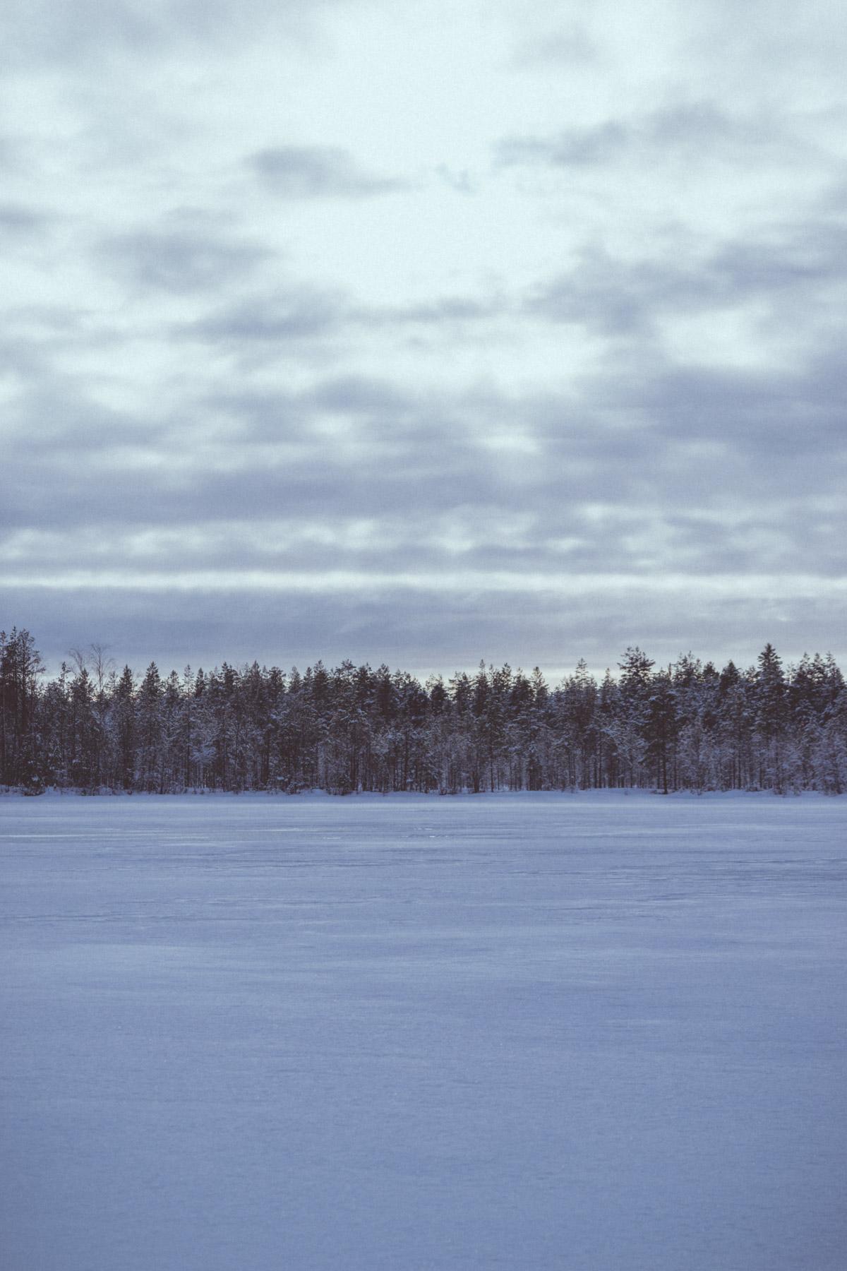 Winter Forest in Yli-Ii