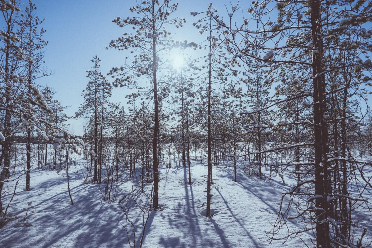 Sun shining bright over forest in Kierikki